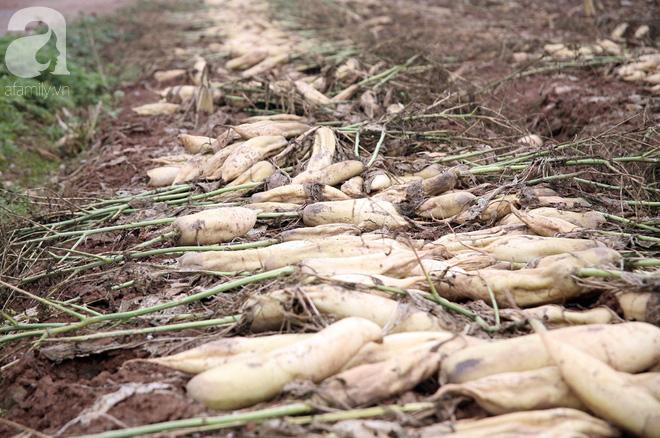 Vụ dân ngậm ngùi đổ hàng trăm tấn củ cải: Chính quyền địa phương bất lực trước sự việc - Ảnh 2.