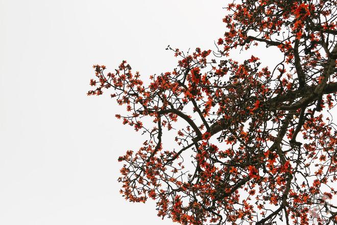 Cứ thấy 4 loài hoa này xuất hiện thì biết ngay tháng 3 đã về rồi - Ảnh 11.
