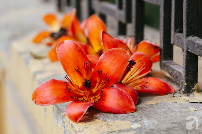 Cứ thấy 4 loài hoa này xuất hiện thì biết ngay tháng 3 đã về rồi - Ảnh 12.