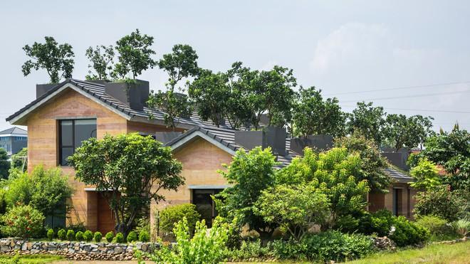 Ngôi nhà không đổ cột bê tông với vườn bưởi trĩu quả trên mái nhà ở Hà Nội - Ảnh 1.