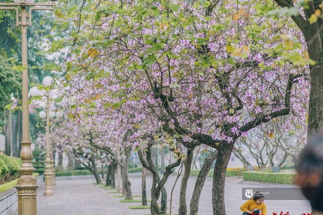 Cứ thấy 4 loài hoa này xuất hiện thì biết ngay tháng 3 đã về rồi - Ảnh 8.