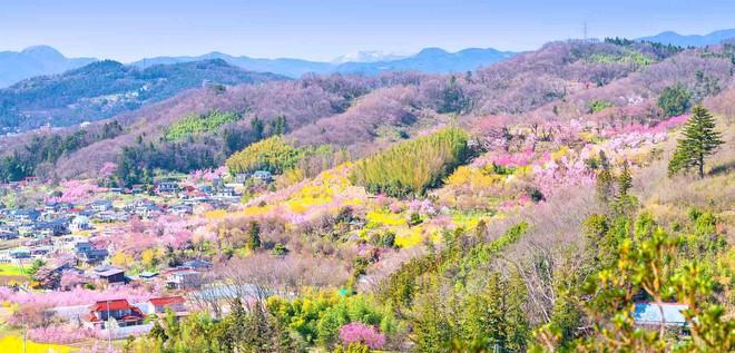 11 món ngon đẹp đến không nỡ ăn rất phổ biến trong mùa hoa anh đào Nhật Bản - Ảnh 1.