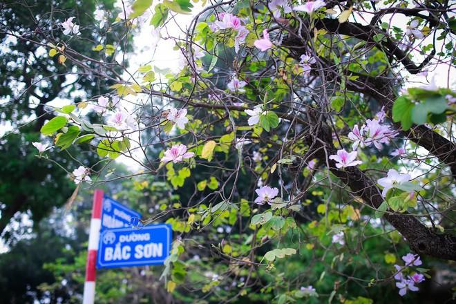 Xao xuyến và êm dịu những sắc hoa tháng 3 Hà Nội - Ảnh 22.