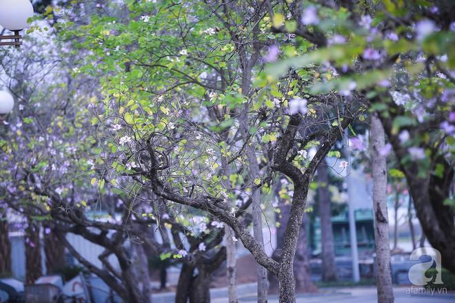 Xao xuyến và êm dịu những sắc hoa tháng 3 Hà Nội - Ảnh 23.