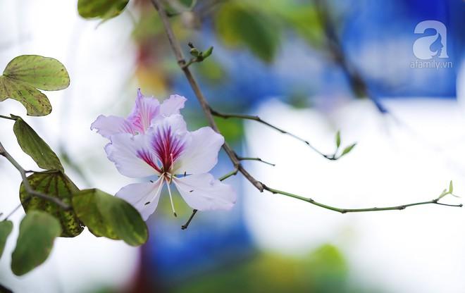Xao xuyến và êm dịu những sắc hoa tháng 3 Hà Nội - Ảnh 24.