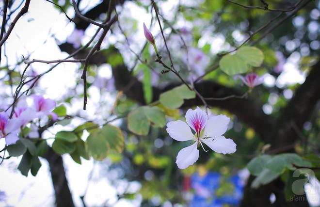 Xao xuyến và êm dịu những sắc hoa tháng 3 Hà Nội - Ảnh 25.