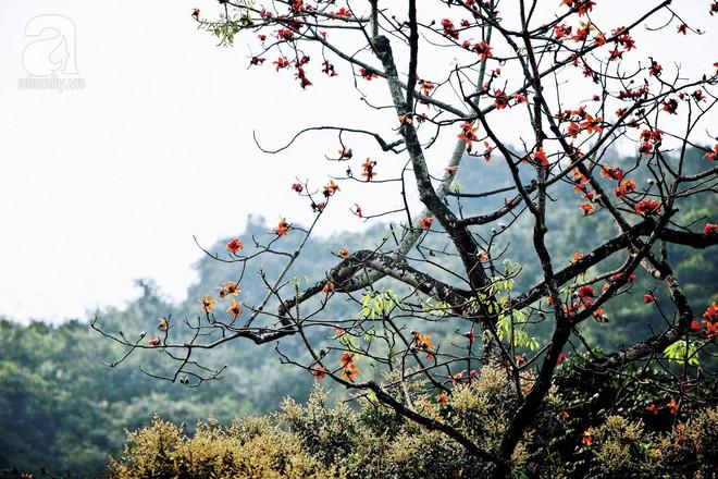 Xao xuyến và êm dịu những sắc hoa tháng 3 Hà Nội - Ảnh 14.