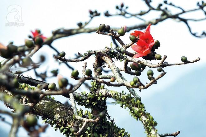 Xao xuyến và êm dịu những sắc hoa tháng 3 Hà Nội - Ảnh 17.