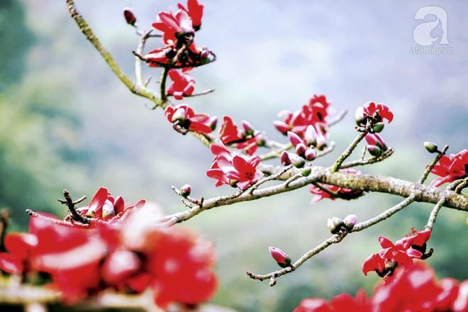 Xao xuyến và êm dịu những sắc hoa tháng 3 Hà Nội - Ảnh 18.