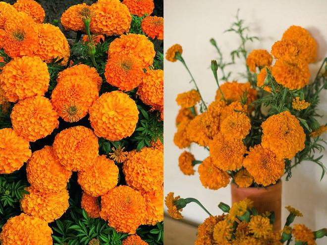 Chọn hạt giống trồng hoa để không khí Xuân ngập tràn cả nhà - Ảnh 5.