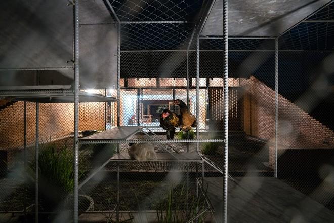 Không chỉ nhà ở, chuồng gà qua tay KTS cũng đẹp và ấn tượng đến ngạc nhiên - Ảnh 6.