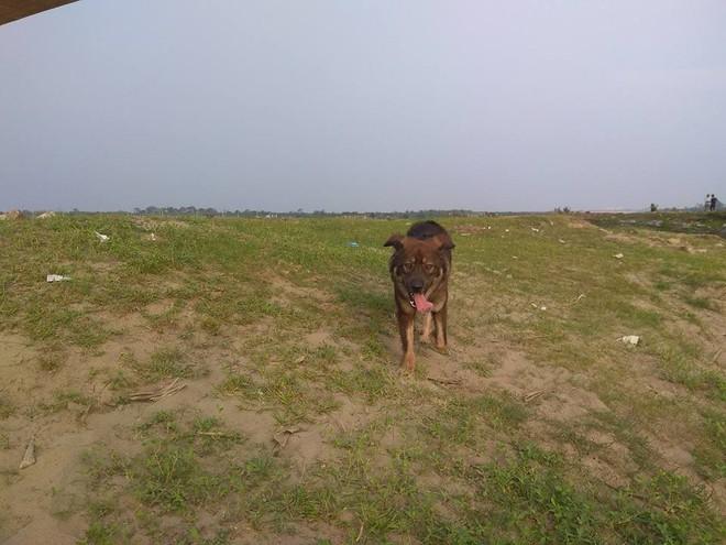 Thanh niên đi thăm mộ chó cưng ở bãi sông Hồng, phát hiện ra mộ biến thành bếp nướng thịt và xung quanh toàn là rác - Ảnh 10.