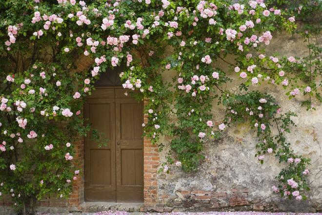 Trồng cây trước cửa nhà là điều cấm kị trong phong thủy nhưng có thể hóa giải bằng cách sau - Ảnh 1.