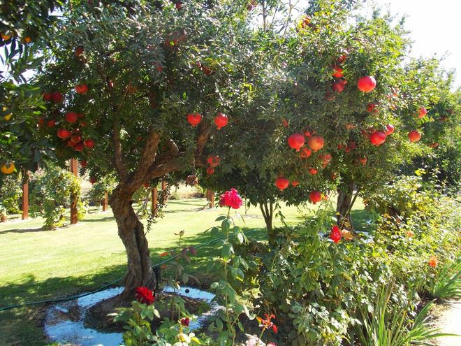 Trồng cây trước cửa nhà là điều cấm kị trong phong thủy nhưng có thể hóa giải bằng cách sau - Ảnh 6.