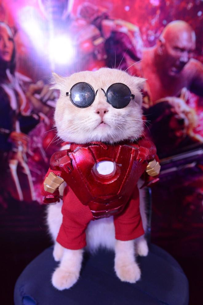 Cả dàn sao Việt đều bị lu mờ trước nhân vật đặc biệt này trong họp báo Avengers - Ảnh 2.