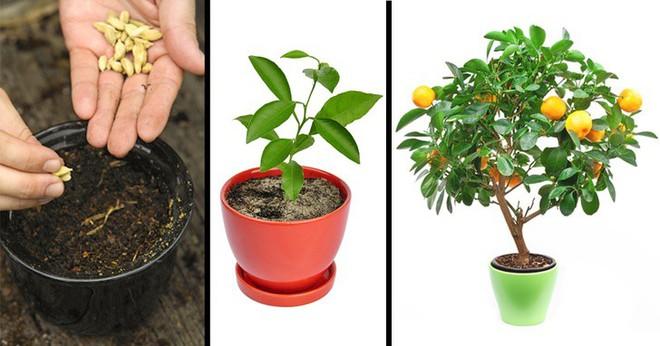 8 loại cây ăn quả có thể trồng từ hạt mà bạn nên trồng trong nhà mình - Ảnh 1.