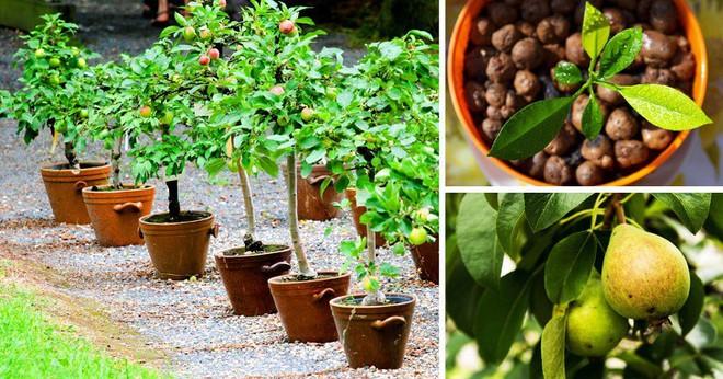 8 loại cây ăn quả có thể trồng từ hạt mà bạn nên trồng trong nhà mình - Ảnh 4.