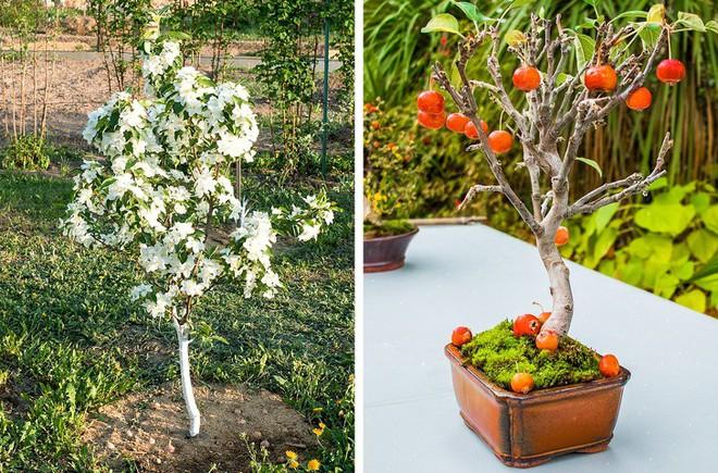 8 loại cây ăn quả có thể trồng từ hạt mà bạn nên trồng trong nhà mình - Ảnh 5.
