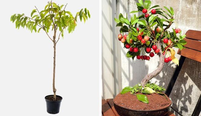 8 loại cây ăn quả có thể trồng từ hạt mà bạn nên trồng trong nhà mình - Ảnh 7.