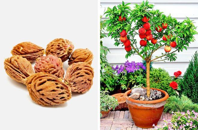 8 loại cây ăn quả có thể trồng từ hạt mà bạn nên trồng trong nhà mình - Ảnh 8.