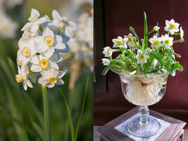 Chọn hạt giống trồng hoa để không khí Xuân ngập tràn cả nhà - Ảnh 4.