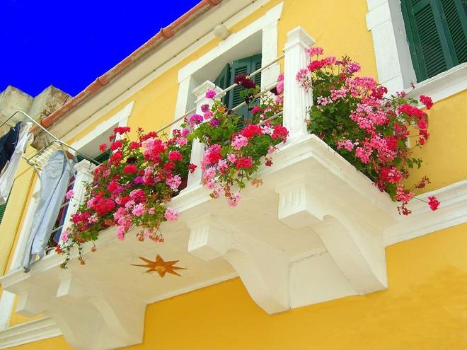 Ngất lịm với những ban công rực rỡ sắc hoa trong sắc hè   - Ảnh 1.