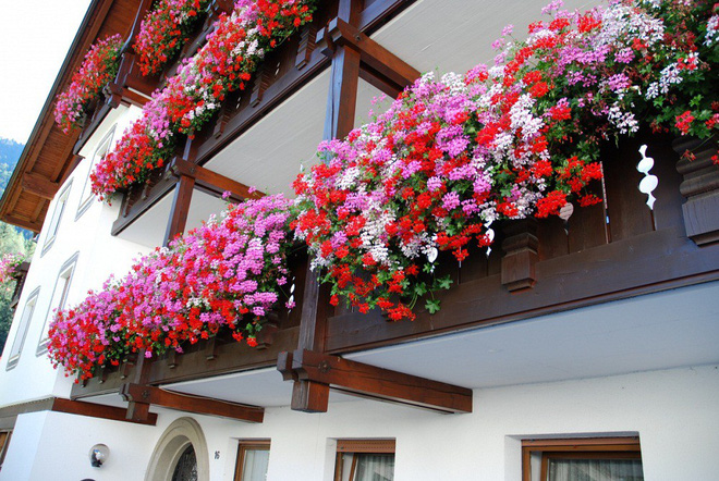 Ngất lịm với những ban công rực rỡ sắc hoa trong sắc hè   - Ảnh 2.