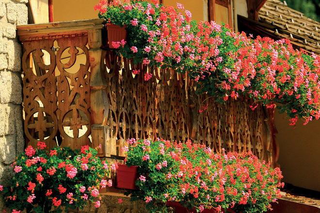 Ngất lịm với những ban công rực rỡ sắc hoa trong sắc hè   - Ảnh 12.