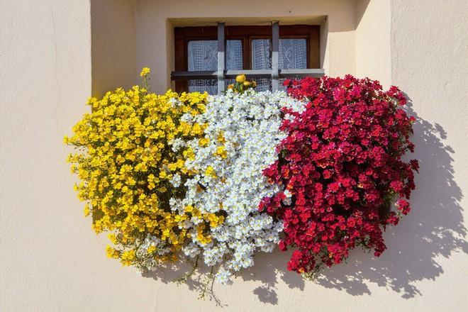 Ngất lịm với những ban công rực rỡ sắc hoa trong sắc hè   - Ảnh 15.