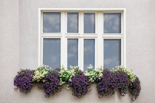 Ngất lịm với những ban công rực rỡ sắc hoa trong sắc hè   - Ảnh 16.