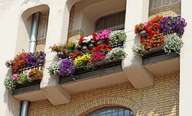 Ngất lịm với những ban công rực rỡ sắc hoa trong sắc hè   - Ảnh 5.