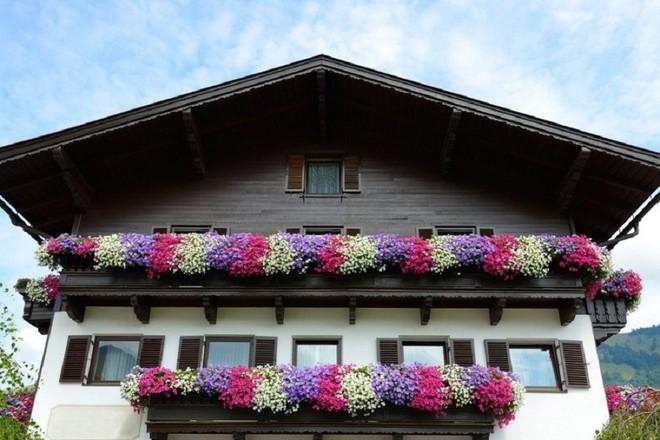 Ngất lịm với những ban công rực rỡ sắc hoa trong sắc hè   - Ảnh 7.