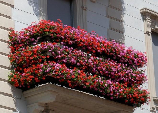 Ngất lịm với những ban công rực rỡ sắc hoa trong sắc hè   - Ảnh 9.