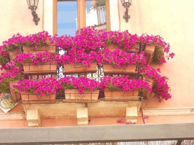 Ngất lịm với những ban công rực rỡ sắc hoa trong sắc hè   - Ảnh 10.