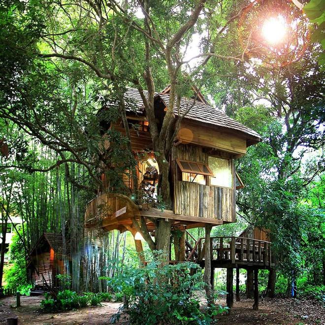 Chiang Mai - đi để tận hưởng kỳ nghỉ trên những tán cây - Ảnh 3.