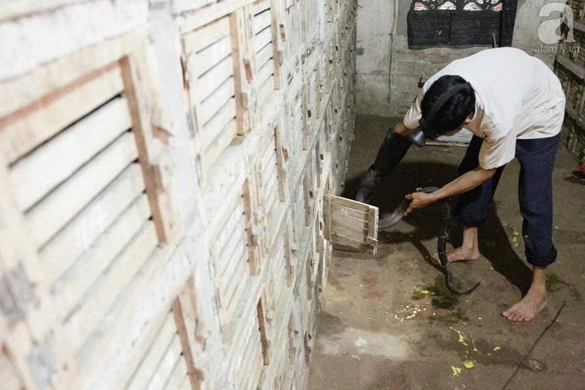 Nông dân kiếm hàng tỷ đồng mỗi năm nhờ nghề lạ - Ảnh 6.