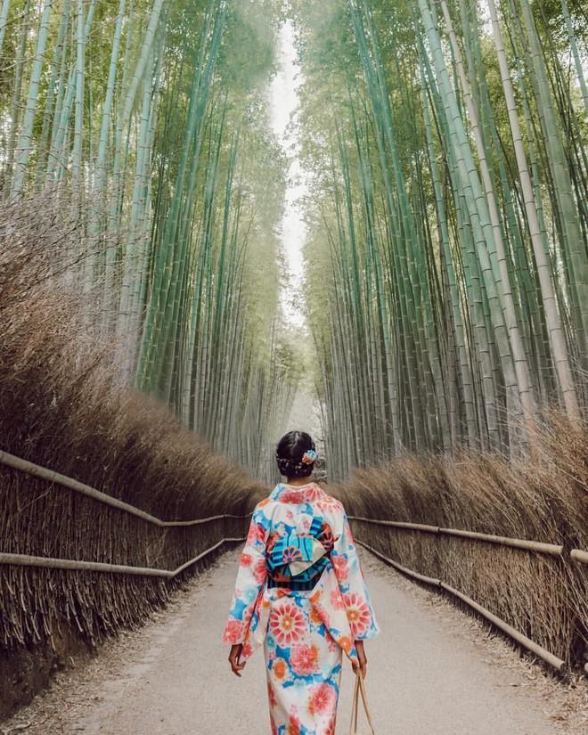 Có gì ở Sagano - khu rừng tre Nhật Bản lọt top những điểm đến phải đến một lần trong đời - Ảnh 1.