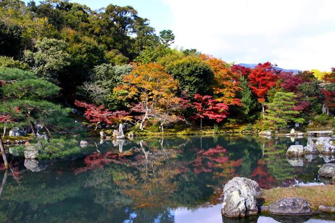 Có gì ở Sagano - khu rừng tre Nhật Bản lọt top những điểm đến phải đến một lần trong đời - Ảnh 6.