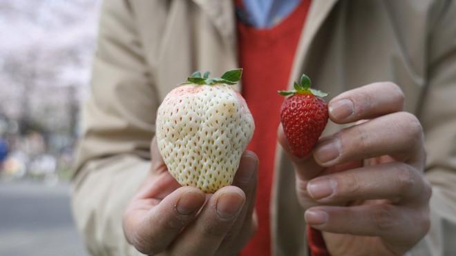 Những loại quả ngon miễn bàn nhưng giá cả chỉ có giời nhà giàu mới dám ăn ở Nhật Bản - Ảnh 4.