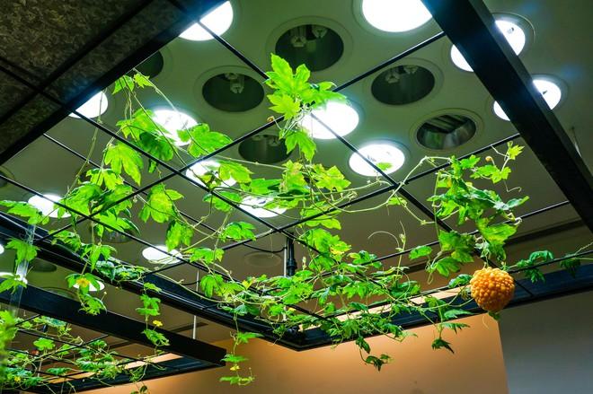 2017-05-03-pasona-indoor-plants-dsc00839-15300189824001948356240.jpg