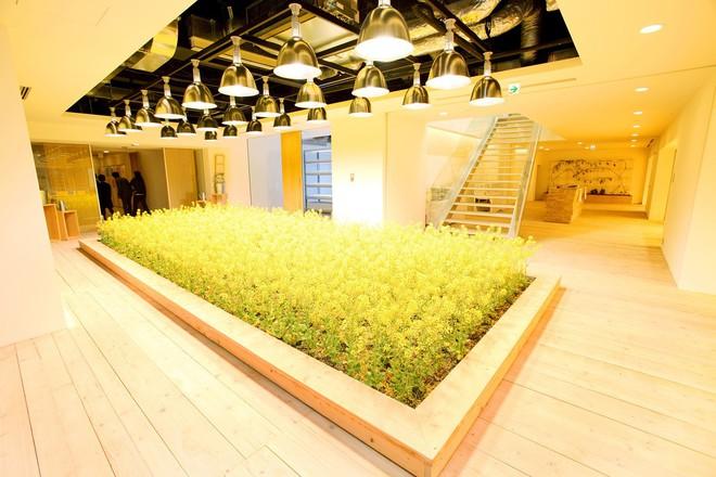 stemgarden-urban-garden-solutions-0009--209-1530018982427131636517.jpg
