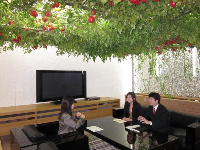 stemgarden-urban-garden-solutions-pasonaurbanfarmtomatoroom-211-1530018982443100331649.jpg
