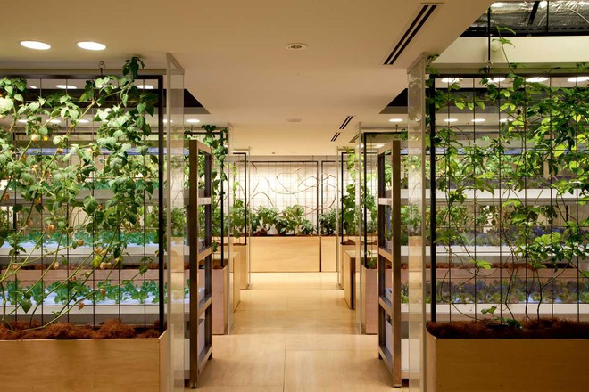 stemgarden-urban-garden-solutions-tokyo-glass-chambers-212-1530018982447617458449.jpg