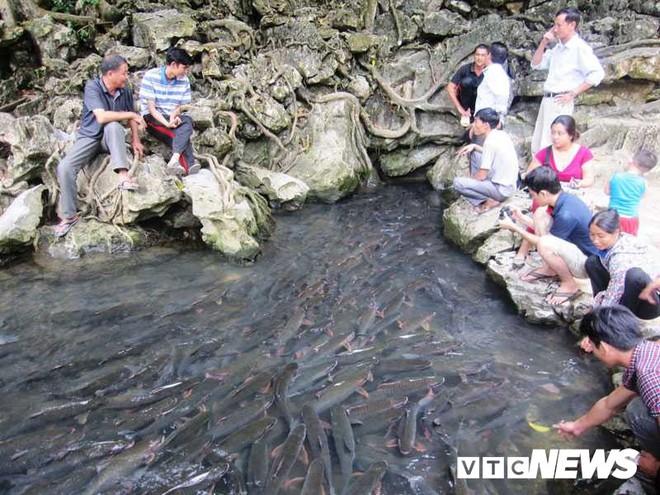 Giải mã chuyện chưa biết về loài cá khiến toàn dân miền tây Thanh Hóa coi trọng như thần - Ảnh 4.