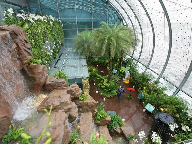 Changi có nhiều tiện nghi mua sắm, giải trí thế này, bảo sao luôn nằm trong top sân bay được ưa thích nhất thế giới - Ảnh 6.