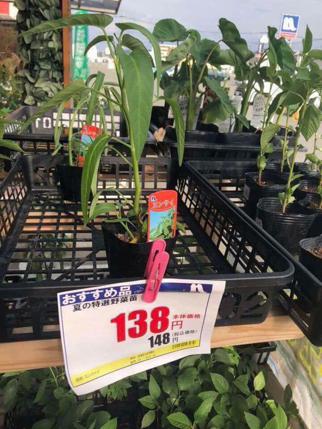 Chùm ảnh: Choáng với những món đồ ở Việt Nam thì cho không ai lấy, sang Nhật Bản thì thành cao lương mĩ vị mất cả đống tiền mới mua được - Ảnh 10.