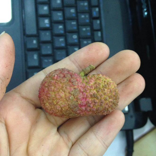Nàng dâu đăng ảnh thách thức mọi cao thủ gọt dứa, dân mạng được thể rần rần khoe trái cây vườn nhà toàn hình thù lạ - ảnh 10