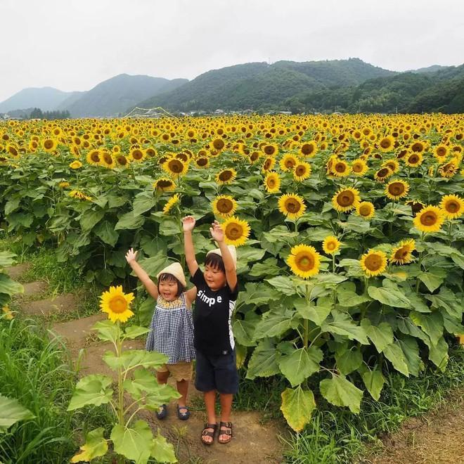 Ngôi nhà nhỏ và cuộc sống đơn sơ của gia đình Nhật Bản ở làng quê khiến bao người ngưỡng mộ - Ảnh 19.