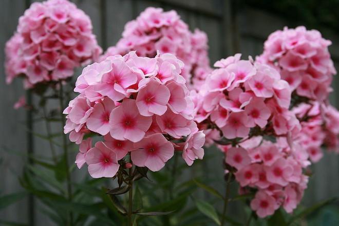 Chọn hạt giống trồng hoa để không khí Xuân ngập tràn cả nhà - Ảnh 7.