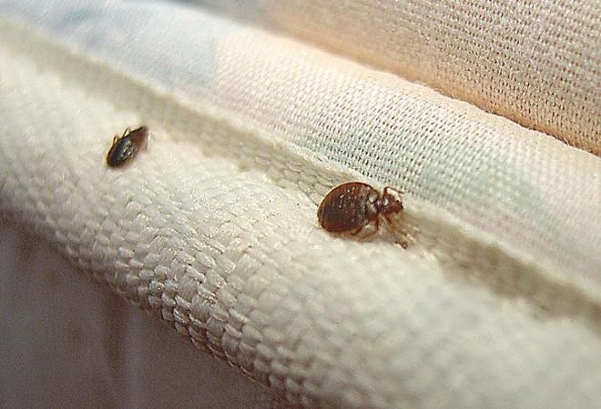 Top 4 loại bẫy diệt bọ rệp, côn trùng đáng ghét ẩn nấp trên giường nệm - Ảnh 1.